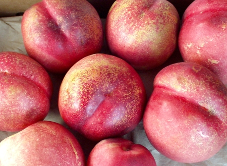 NectarPlums from Collins Family Orchards. Photo copyright 2009 by Zachary D. Lyons.