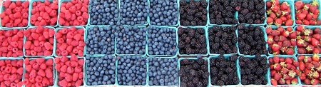 A rainbow of berries from Sidhu Farms. Photo copyright 2010 by Zachary D. Lyons.