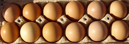 Farm-fresh eggs from Growing Things Farms at Madrona Farmers Market. Copyright Zachary D. Lyons.