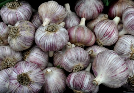 German red garlic from Kirsop Farm. Photo copyright 2013 by Zachary D. Lyons.