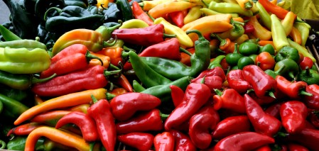 Hot chile peppers from Alvarez Organic Farms at Madrona Farmers Market. Copyright Zachary D. Lyons.