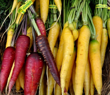 Colorful carrots from Growing Things Farm. Photo copyright 2013 by Zachary D. Lyons.