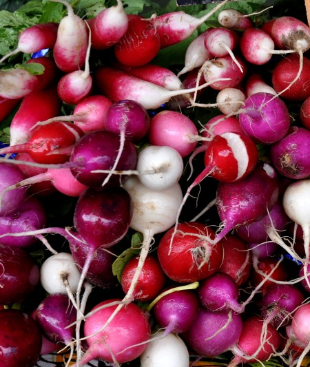 Radishes from Blue Bird Farm. Photo copyright 2014 by Zachary D. Lyons.