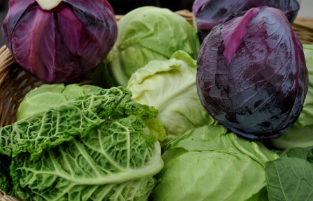 Cabbage from Tani Creek Farm. Photo copyright 2014 by Zachary D. Lyons.