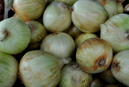 Sweet onions from Alvarez Organic Farms. Photo copyright 2014 by Zachary D. Lyons.