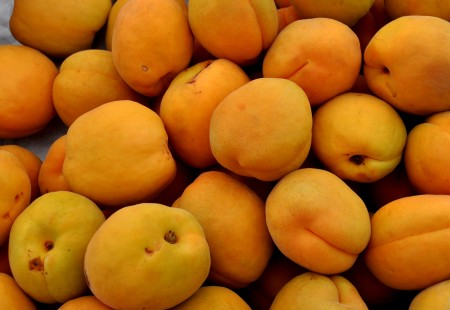 Perfection apricots from Martin Family Orchards. Photo copyright 2014 by Zachary D. Lyons.