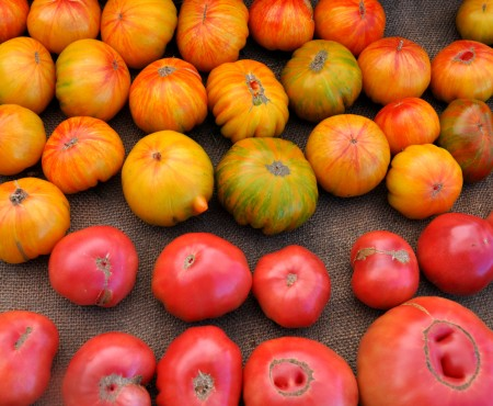 Copia & Brandywine tomatoes from One Leaf Farm. Photo copyright 2014 by Zachary D. Lyons.