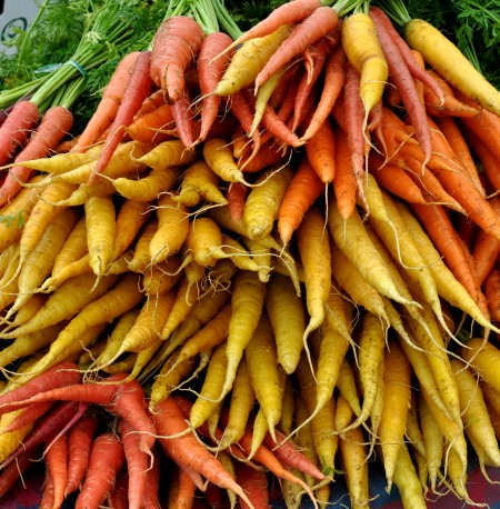 A rainbow of carrots from Tani Creek Farm. Photo copyright 2014 by Zachary D. Lyons.
