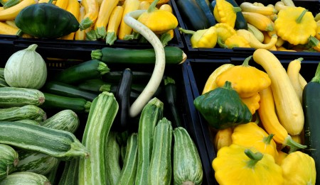 Summer squash from Tani Creek Farm. Photo copyright 2014 by Zachary D. Lyons.