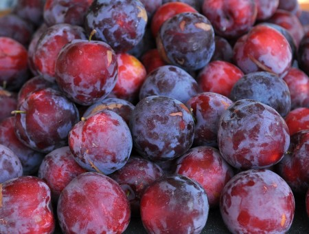 Fortune plums from Collins Family Orchards. Copyright Zachary D, Lyons.