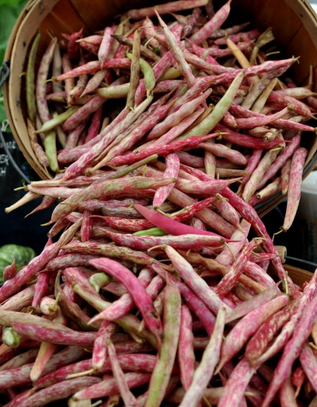 Cranberry shelling beans from Kirsop Farm at Madrona Farmers Market. Copyright Zachary D. Lyons.