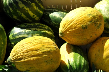 Melons from Lyall Farms at Madrona Farmers Market. Copyright Zachary D. Lyons.