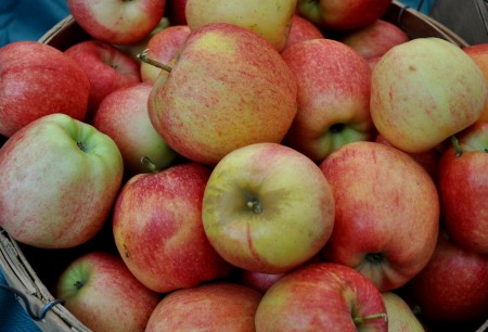 Gala apples from Martin Family Orchards at Madrona Farmers Market. Copyright Zachary D. Lyons.