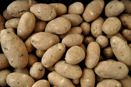 Rio Grande russet potatoes. Copyright Zachary D, Lyons.