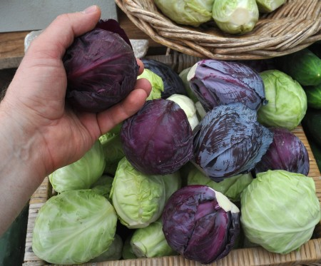 Baby cabbages from Tani Creek Farm. Copyright Zachary D. Lyons.