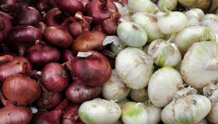 Cipollini onions from Tani Creek Farm at Madrona Farmers Market. Copyright Zachary D. Lyons.
