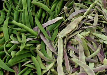 Romano beans from Tani Creek Farm. Photo copyright 2014 by Zachary D. Lyons.