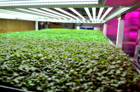 The vertical urban microgreens farm of Farmbox Greens available at Madrona Farmers Market. Copyright Zachary D. Lyons.