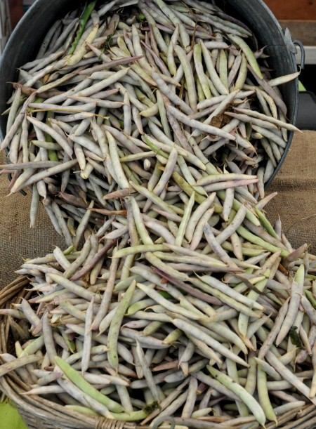 Black turtle bean from Growing Things Farm at Madrona Farmers Market. Copyright Zachary D. Lyons.