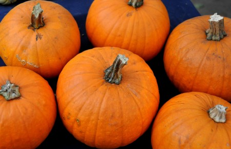Sugar pie pumpkins from Kirsop Farm at Madrona Farmers Market. Copyright Zachary D. Lyons.