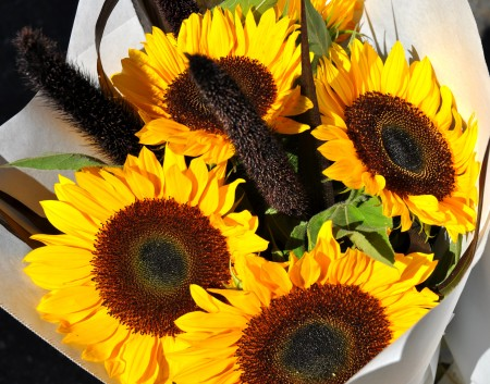 Sunflowers from Yeng Garden at Madrona Farmers Market. Copyright Zachary D. Lyons.
